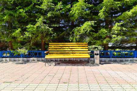 Yellow wooden bench. In the park on a bright sunny day. View from the front. There are pine trees at the back.