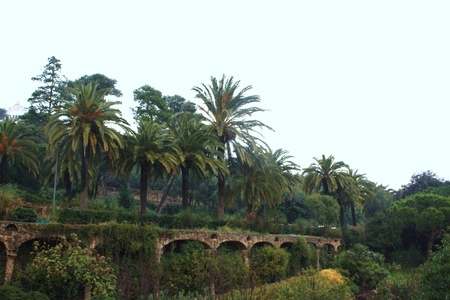 cycas: The green palms on the old bridge