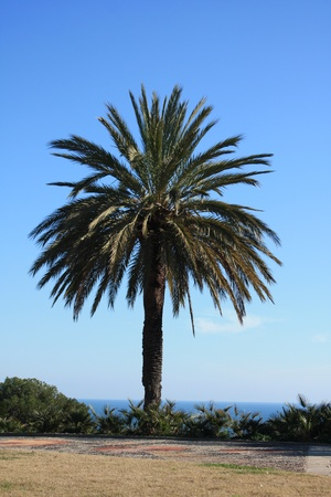 cycas: The green and high palm on the beach Stock Photo
