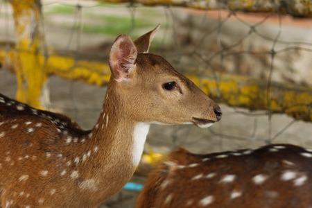 celula animal: Peque�o animal en que las c�lulas del zool�gico