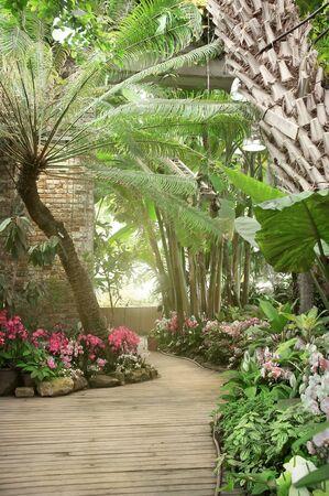 Boardwalk in orangery. Exotic plant collection. Winter garden. Moscow State University botanical garden (Aptekarskiy Ogorod), Moscow, Russia