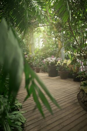 Exotic plants in orangery. Tropical plant collection. Winter garden. Moscow State University botanical garden (Aptekarskiy Ogorod), Moscow, Russia