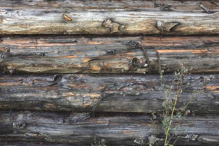 Dark gray wooden background. Old weathered log wall. Craked shabby logs 版權商用圖片