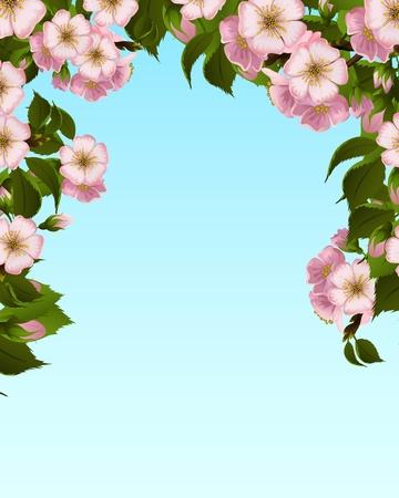 Apple blossom frame Vector