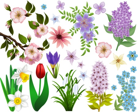 narcissus: Collection of spring flowers. Raster version Illustration