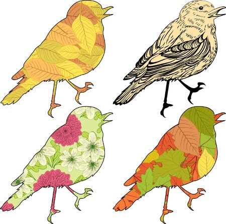 Set of vector birds with patch silhouettes