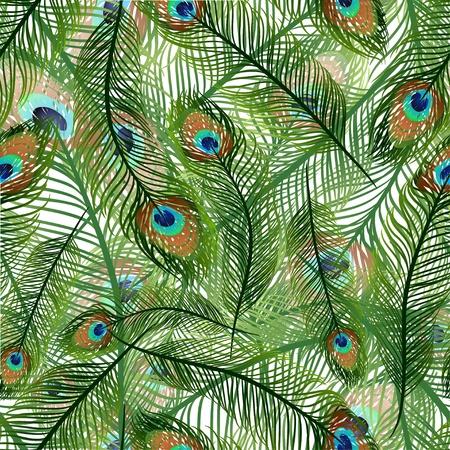 plumas de pavo real: Textura transparente con plumas de pavo real