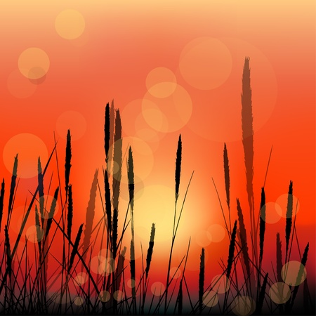 Vector landscape with red sunrise and grass silhouettes Illustration