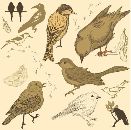 sparrow bird: Set of handdrawn birds Illustration