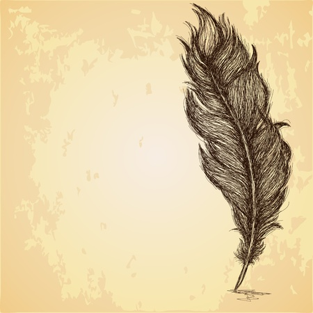 feather quill: Sketch of the feather on grungy texture