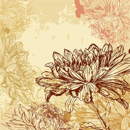 Chrysanthemum background Vector