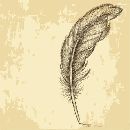 plume: Croquis de la plume sur la texture grungy Illustration