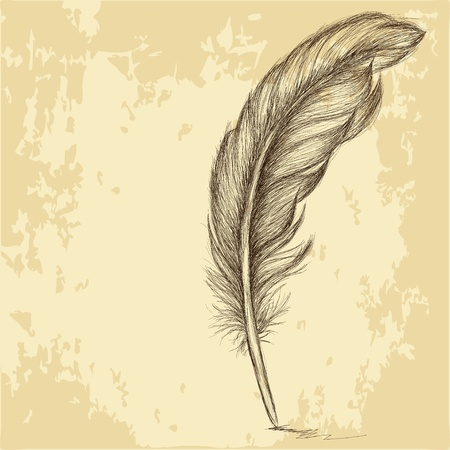 quill pen: Sketch of the feather on grungy texture