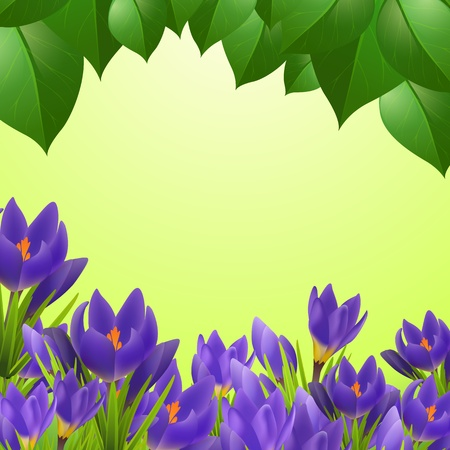 Spring card with crocuses Stock Vector - 18512395