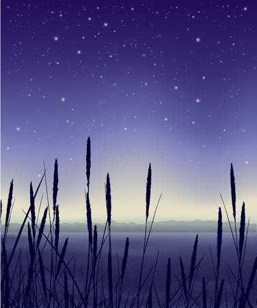 갈 대와 별이 빛나는 밤 풍경 일러스트