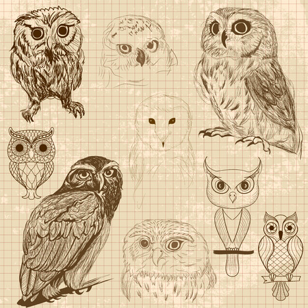 wise old owl: Set of retro owl sketches