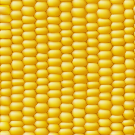 Corn vector seamless realistic texture
