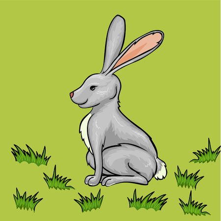 Vector cartoon rabbit on green grass photo