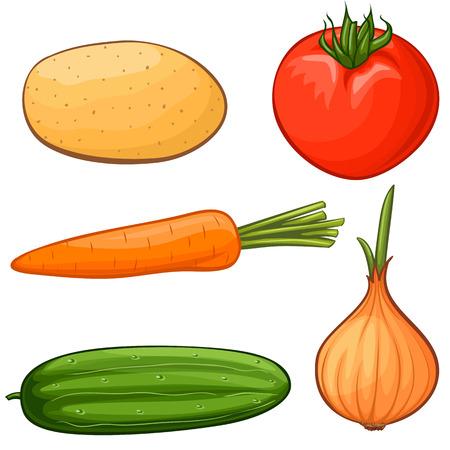 raw potato: Vector cartoon vegetables Illustration