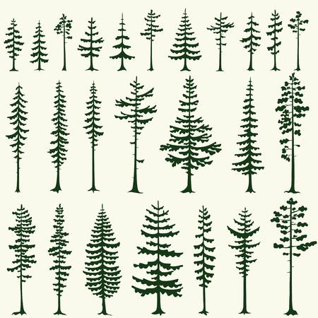 cedro: Conjunto de siluetas estilizadas de pino. Ilustración del vector.