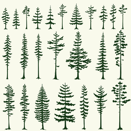 firs: Set of stylized pine silhouettes. Vector illustration.
