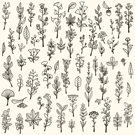grass flower: Collection of handdrawn vector doodle herbs and flowers Illustration