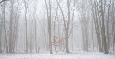 Winter forest covered with fog .