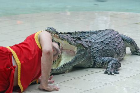 A keeper at a zoo in Thailand places his head in the jaws of a large crocodile Stock Photo - 1179305