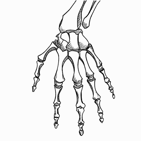 Skeleton hand vector. Hand drawn sketch isolated on white background