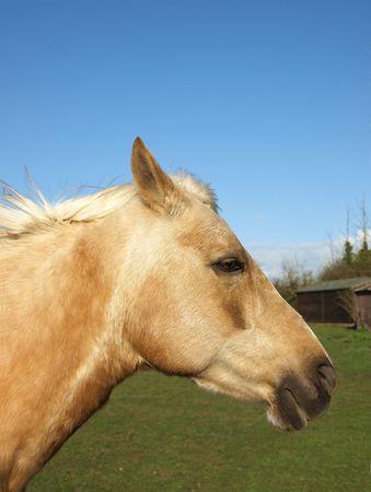 Horse's Head Stock Photo - 4922897