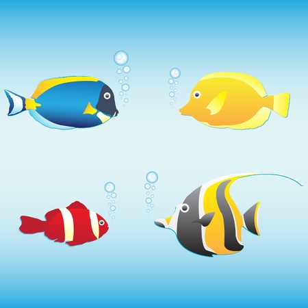 tang: Tropical fish collection (anemone fish, butterfly fish, moorish idol, blue tang), vector illustration Illustration