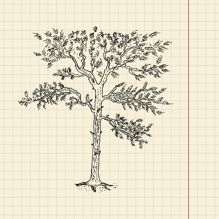 Pine tree sketch on school paper, vector illustration, eps 10 Vector