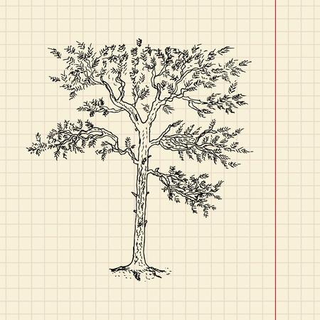 Pine tree sketch on school paper, vector illustration, eps 10 Vector