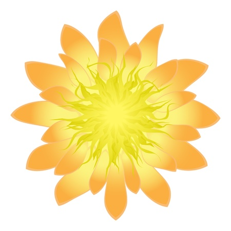 Isolated detailed flower, vector illustration Vector