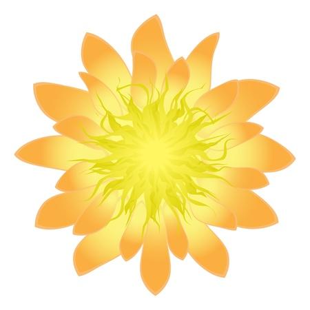 Isolated detailed flower, vector illustration