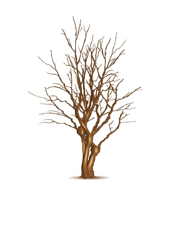 Leafless dry tree, vector illustration, eps10 Illustration