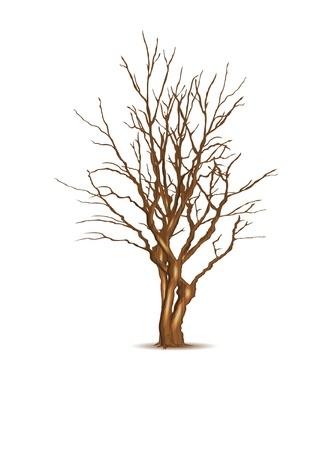 Leafless dry tree, vector illustration, eps10 Ilustracja
