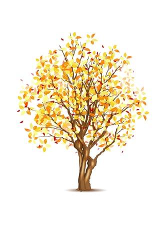 Vecteur automne arbre isolé sur blanc, illustration vectorielle, eps10, trois couches, facile modifiable