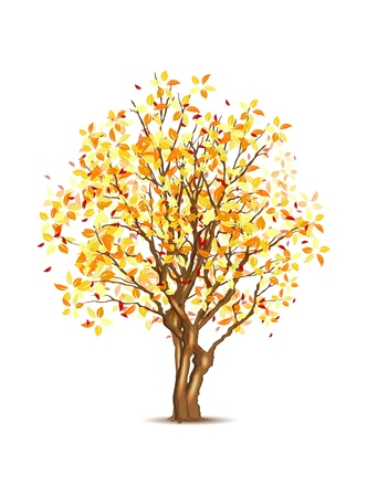 Vector autumn tree isolated on white, vector illustration, eps10, three layers, easy editable