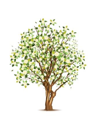 Green spring apple tree, vector illustration, eps10, three layers, easy editable