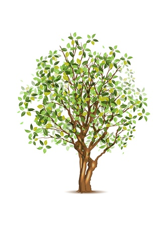 Green spring tree, vector illustration, eps10, three layers, easy editable