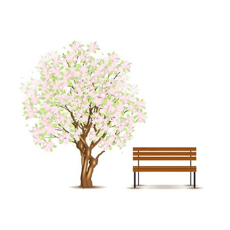 banc de parc: Traditionnel arbre japonais et un banc isolé sur blanc Illustration
