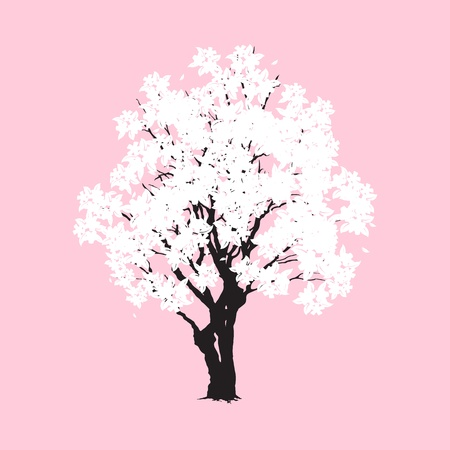 Sakura tree isolated on pink, vector illustration, eps10 Stock Vector - 15013409