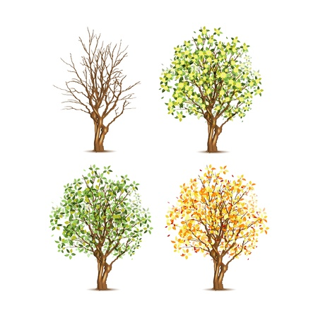 Set of four trees in different seasons, transparent shadow