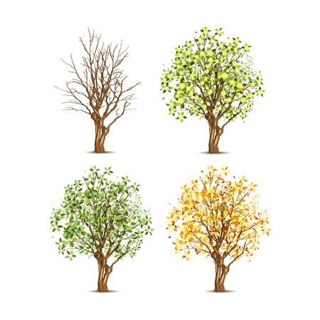 Set van vier bomen in verschillende seizoenen, transparante schaduw
