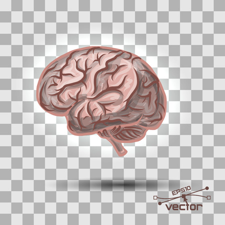 quantity: Brain of the person with a considerable quantity of convolutions