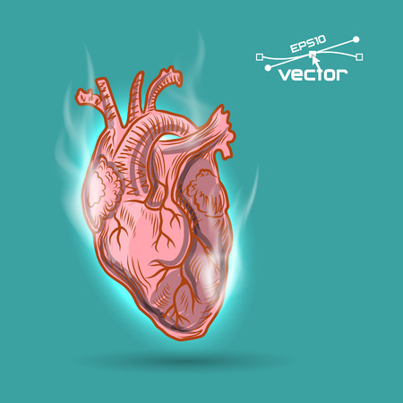 Corazón Humano Anatómico Dibujo En Estilo De Dibujos Animados