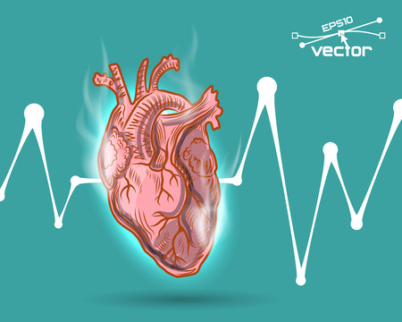 vena: Human heart beat, vector illustration for your design, 6 editable layers