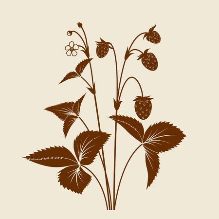 Strawberry shrub with fruits and flowers silhouette isolated Vector