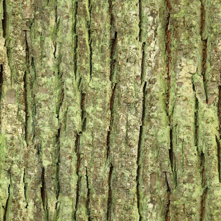 seamless tree bark, rind overgrown with moss texture Stock Photo - 11082535